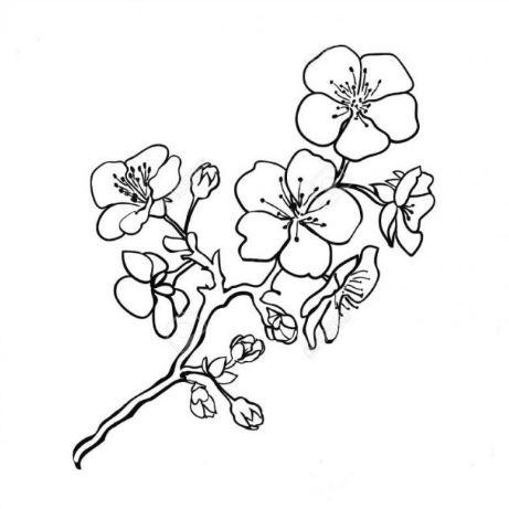 Mẫu tranh tô màu cho bé hình cành hoa mai không thể thiếu trong ngày tết