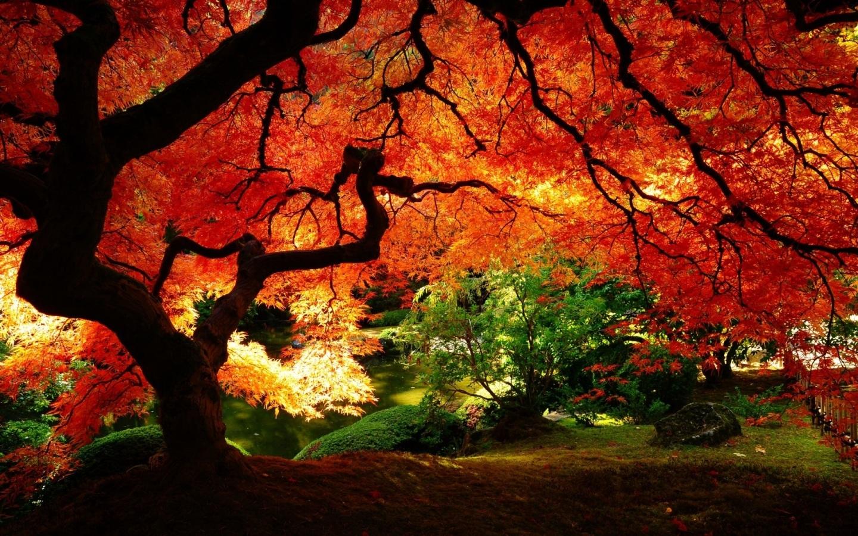 Một bức tranh đỏ rực từ tạo vật mà thiên nhiên ban lại