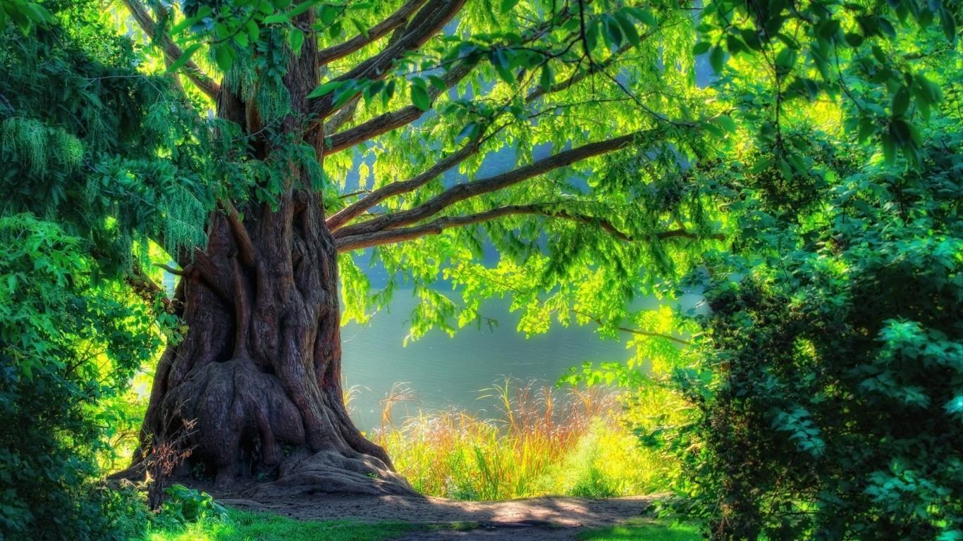 Bức tranh phong cảnh đep mà thiên nhiên đã mang lại