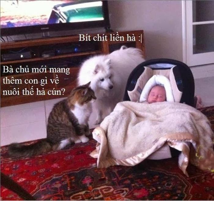 Ảnh chế cuộc trò chuyện hài hước của đứa bé và hai con vật
