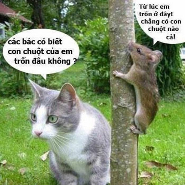 Ảnh chế hài hước dành cho chú mèo và chú chuột