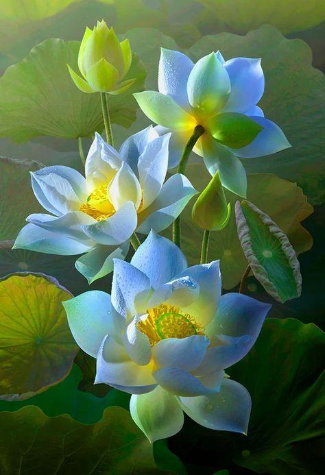 Tổng hợp hình ảnh hoa sen xanh đẹp