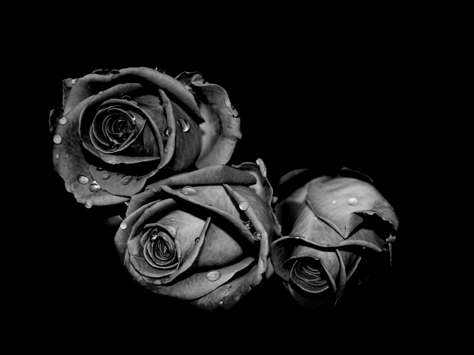 Hình ảnh Hoa hồng đen - ý nghĩa hoa hồng đen