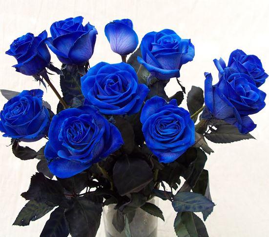 Hình ảnh lọ hoa hồng xanh đẹp nhất