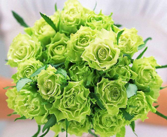 Ảnh bó hoa hồng xanh lá cây đẹp