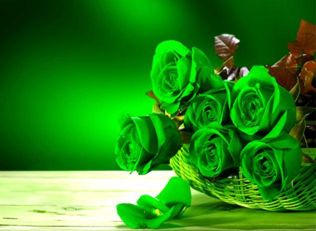 Hình nền hoa hồng xanh lá cây đẹp