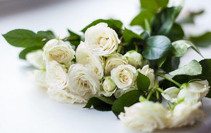 hình ảnh hoa hồng trắng đẹp